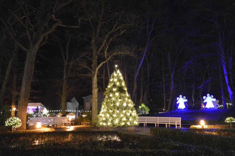 Beleuchteter Christbaum auf dem Binzer Weihnachtsmarkt