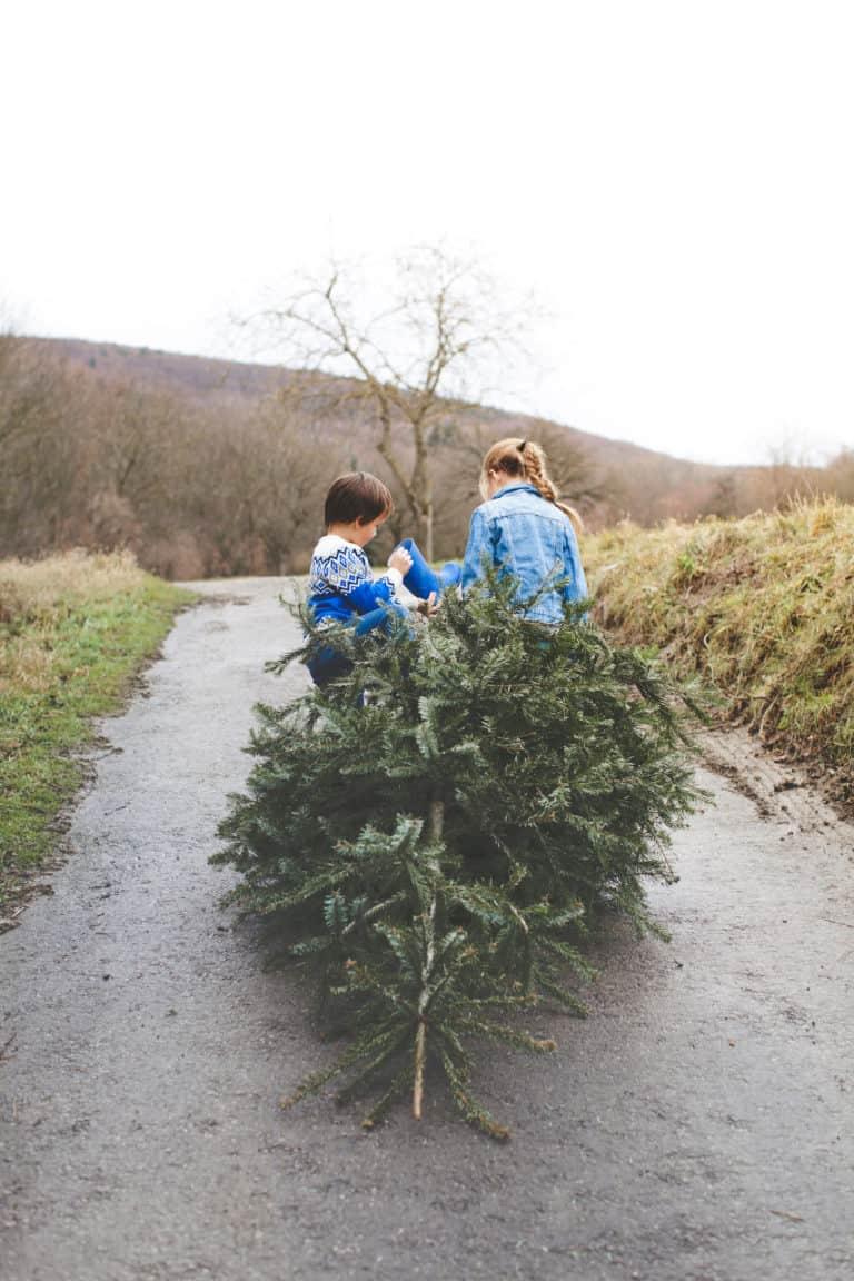 Geschwister ziehen Weihnachtsbaum