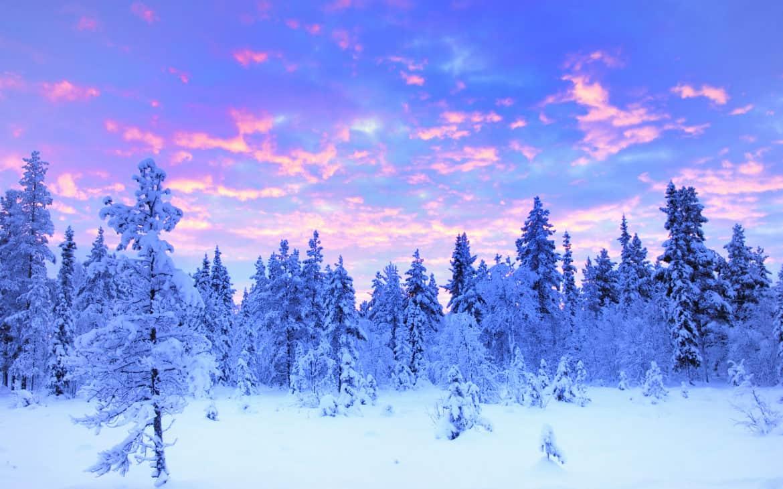 Pastellfarbener Himmel über schneebedeckten Bäumen in Norwegen