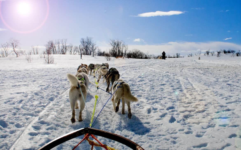 Huskytour durch verschneite Landschaft