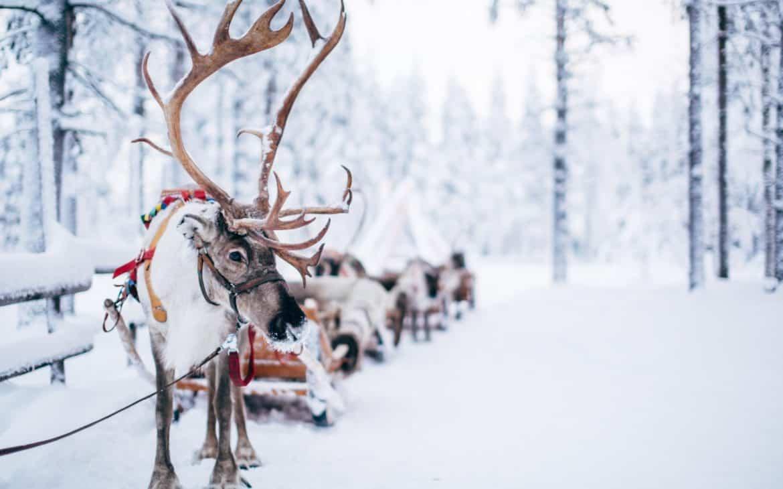 Rentier-Schlitten in verschneiter Landschaft im finnischen Lappland